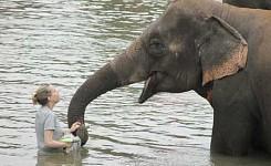 1_Elephants